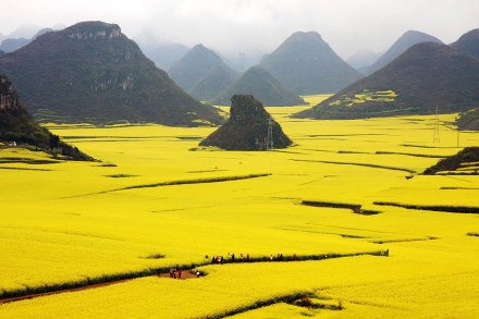 amazing-places-Canola Flower Fields, China